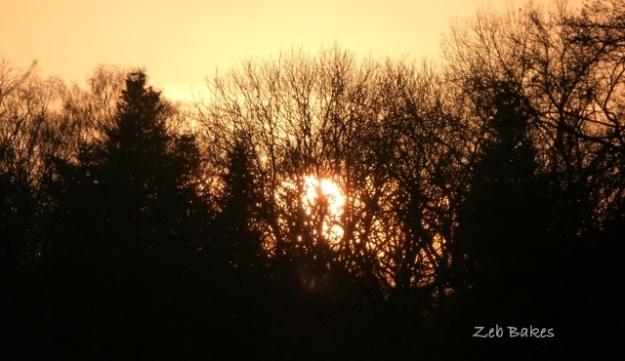 Sunset through trees at Westonbirt
