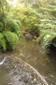 The little weirs in Badock's Woods