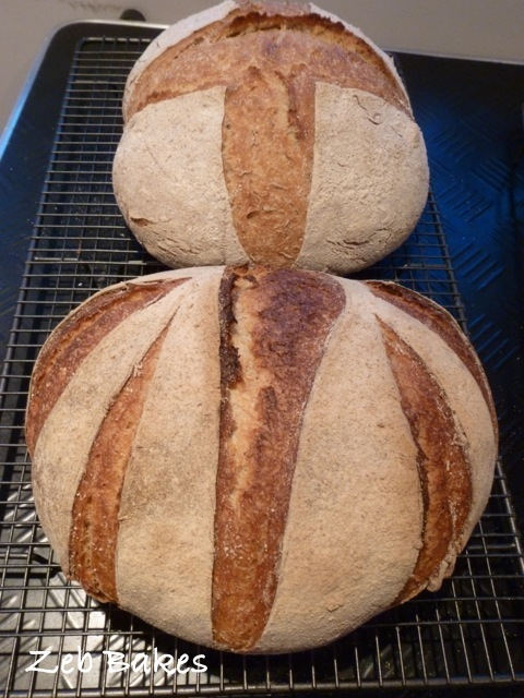 Caraway Rye at the back and Kamut and regular wheat at the front