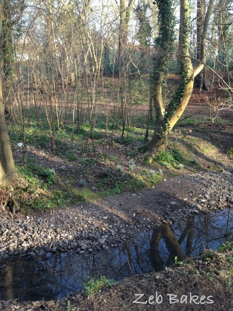 The mud has dried and there are snowdrops on the bank
