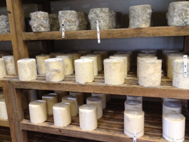 Maturing cheese at Thornby Moor Dairy Cheese Farm