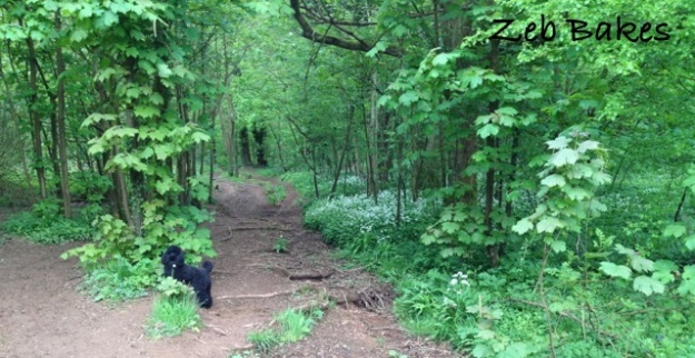 Zeb on the Wild Garlic Trail