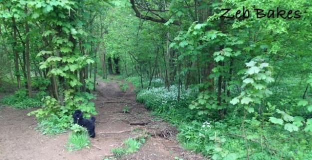 Zeb on the Wild Garlic Trail