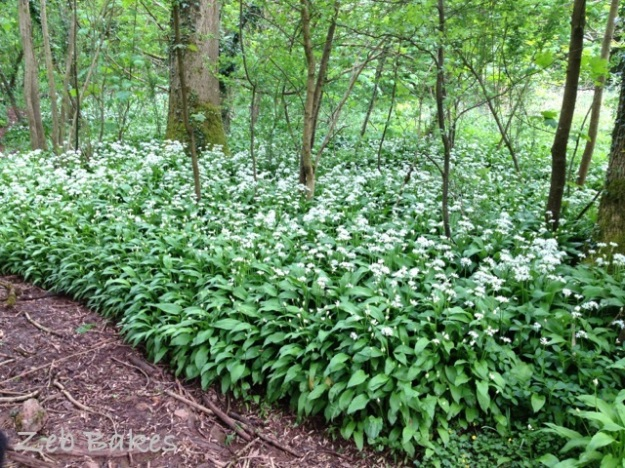 one last pic of the wild garlic
