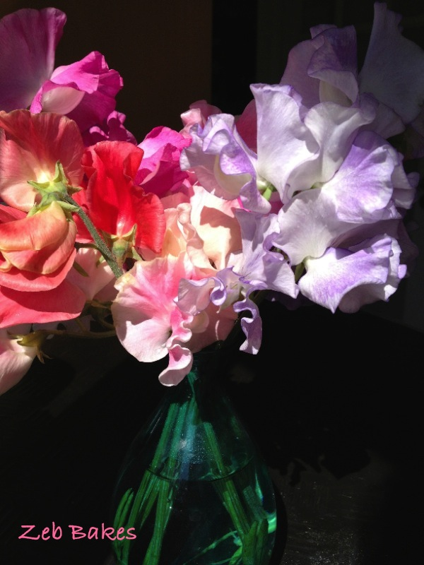 My neighbour's gift of sweet peas