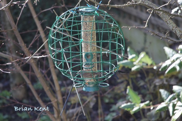 There is a dunnock in here if you look closely!