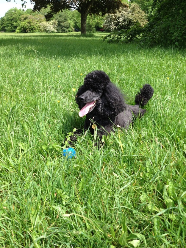 Zeb in the Grass with Blue Ball