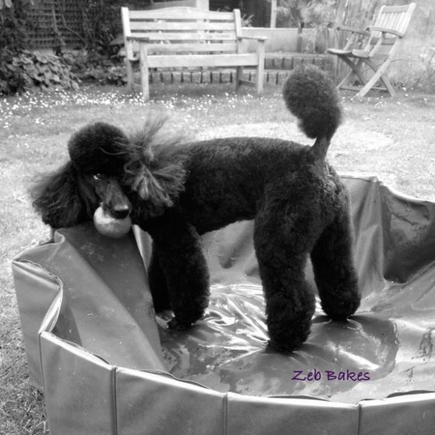 Zeb in the Pool