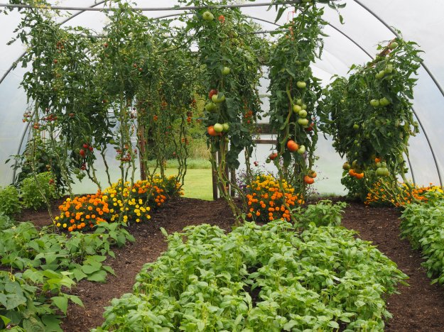 polytunnel envy